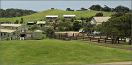 Ace Hi Riding Ranch - Accommodation Fremantle